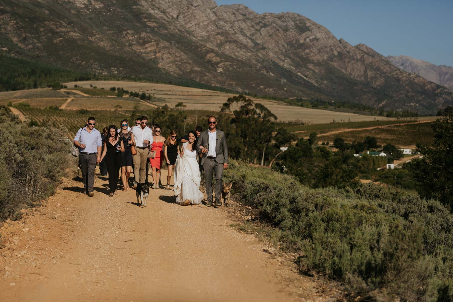 Epic moment where bride and groom lead their wedding party down a dusty farm road, singing and drinking wine, towards the reception dinner in the Tulbagh mountains, near Riebeek Kasteel.