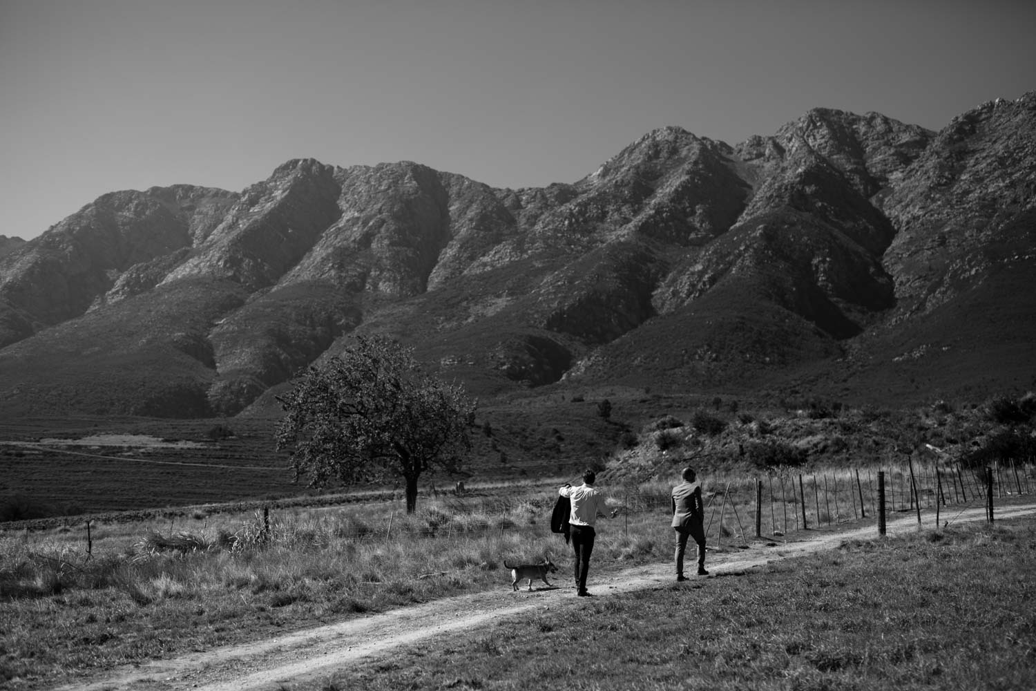 Groom and groomsmen and dog walk up the road towards groom's wedding ceremony on a Tulbagh surrounded by mountains in the Western Cape