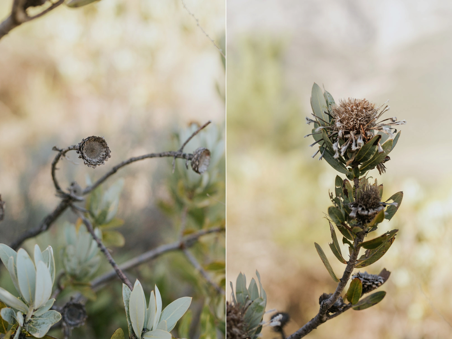 Wedding details - and old dried Protea