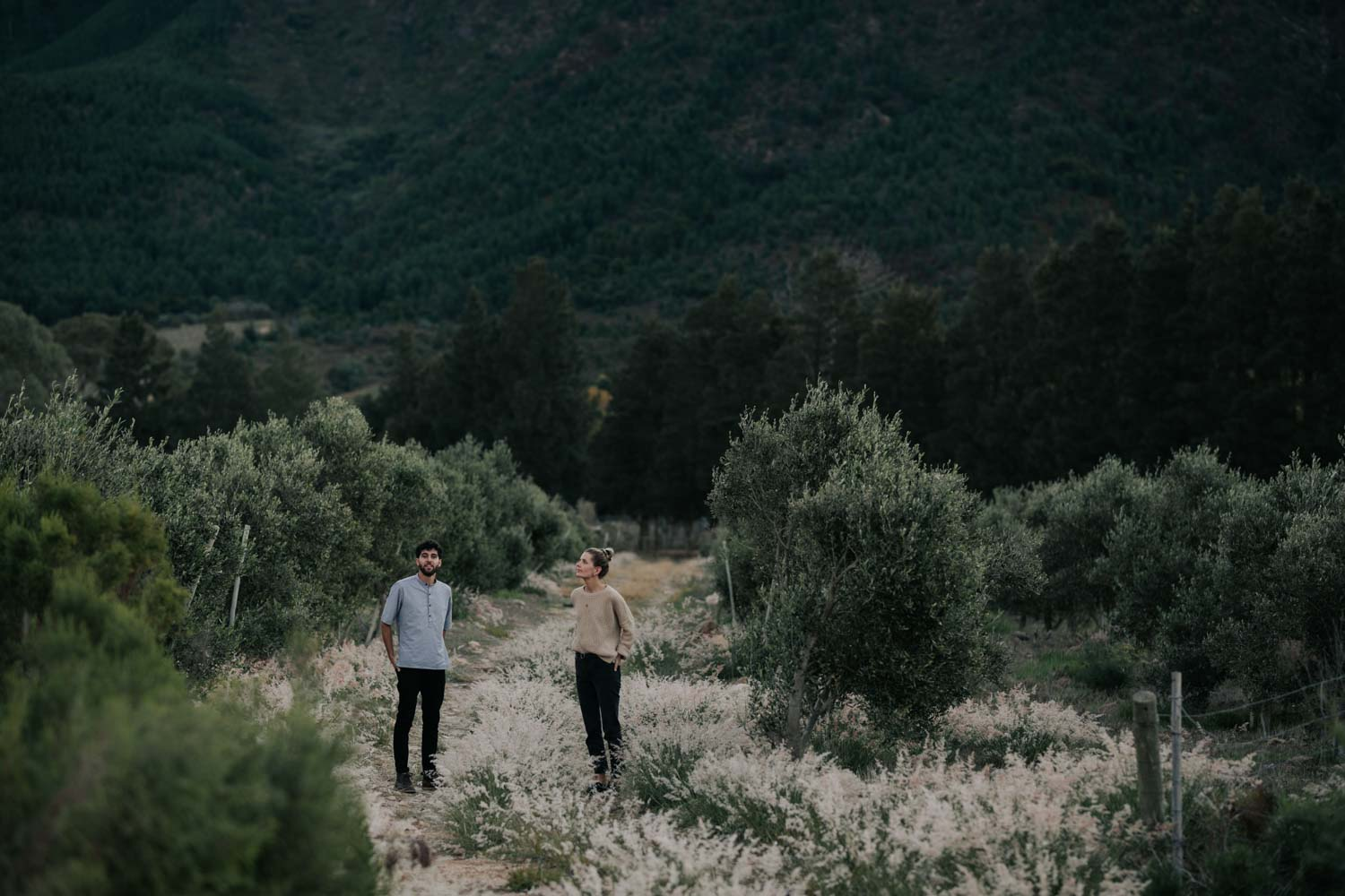 Couple stands in the olive trees together during their Autumn engagement photo session surrounded by mountains