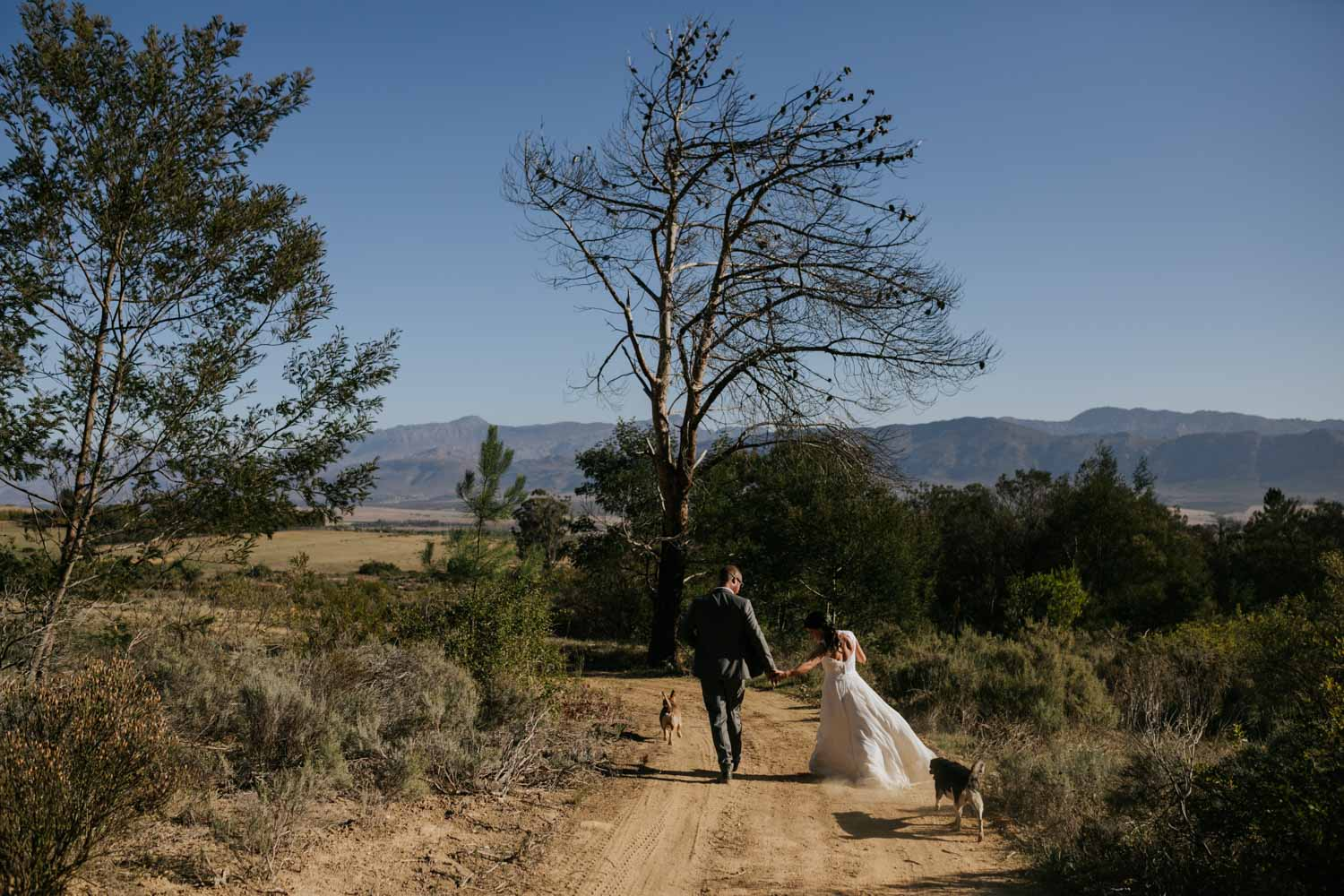 Bride and groom running down dusty farm road with their dogs, in Tulbagh, near Riebeek Kasteel in the Western Cape.