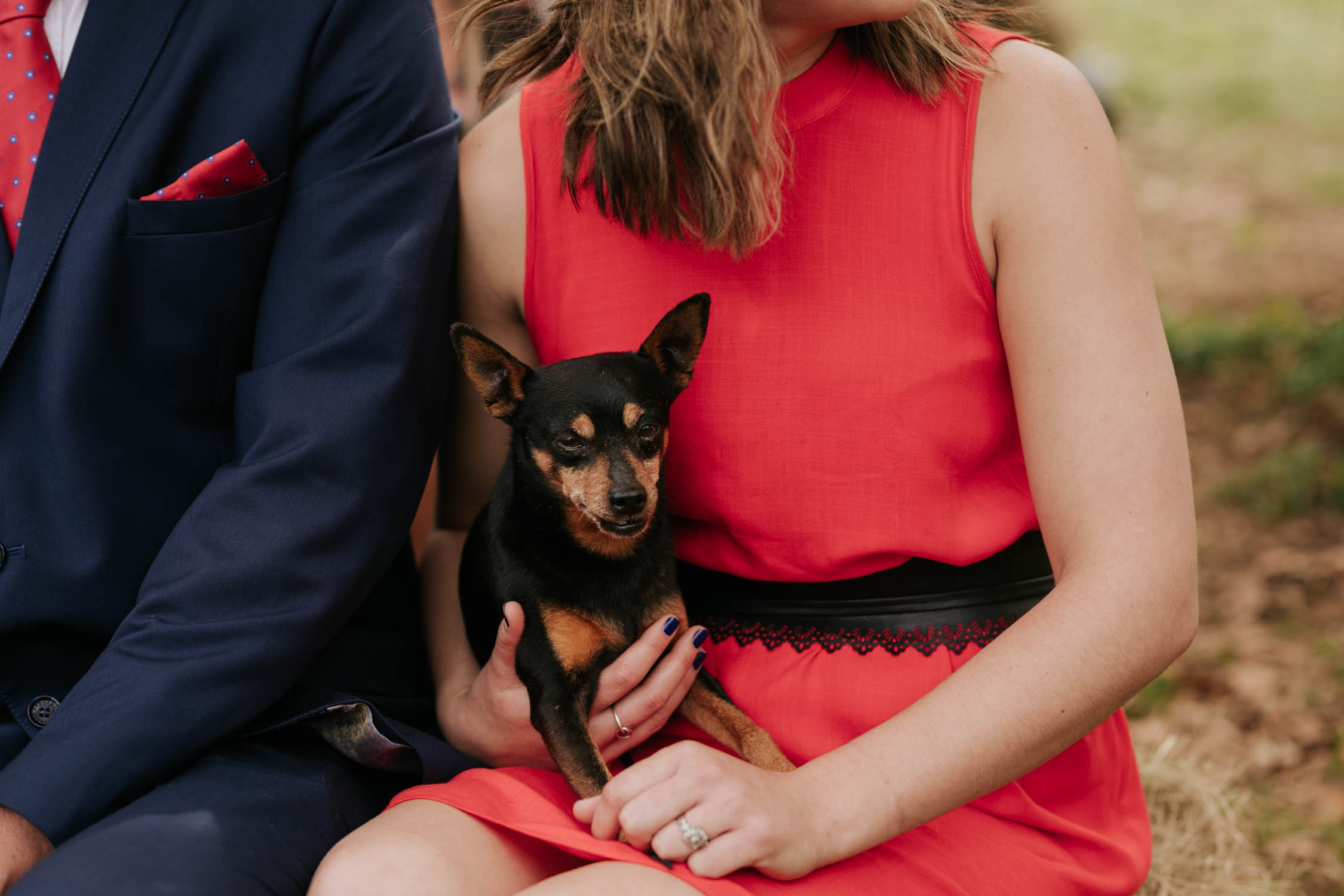 Small black and brown dog sitting girl's lap during wedding ceremony. She is wearing a red dress.