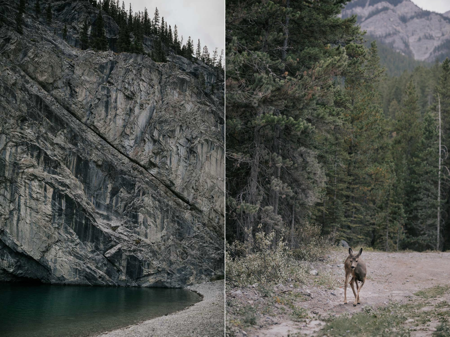 Epic Turquoise Lake and River Rock Face In Alberta Forest And Deer On Road
