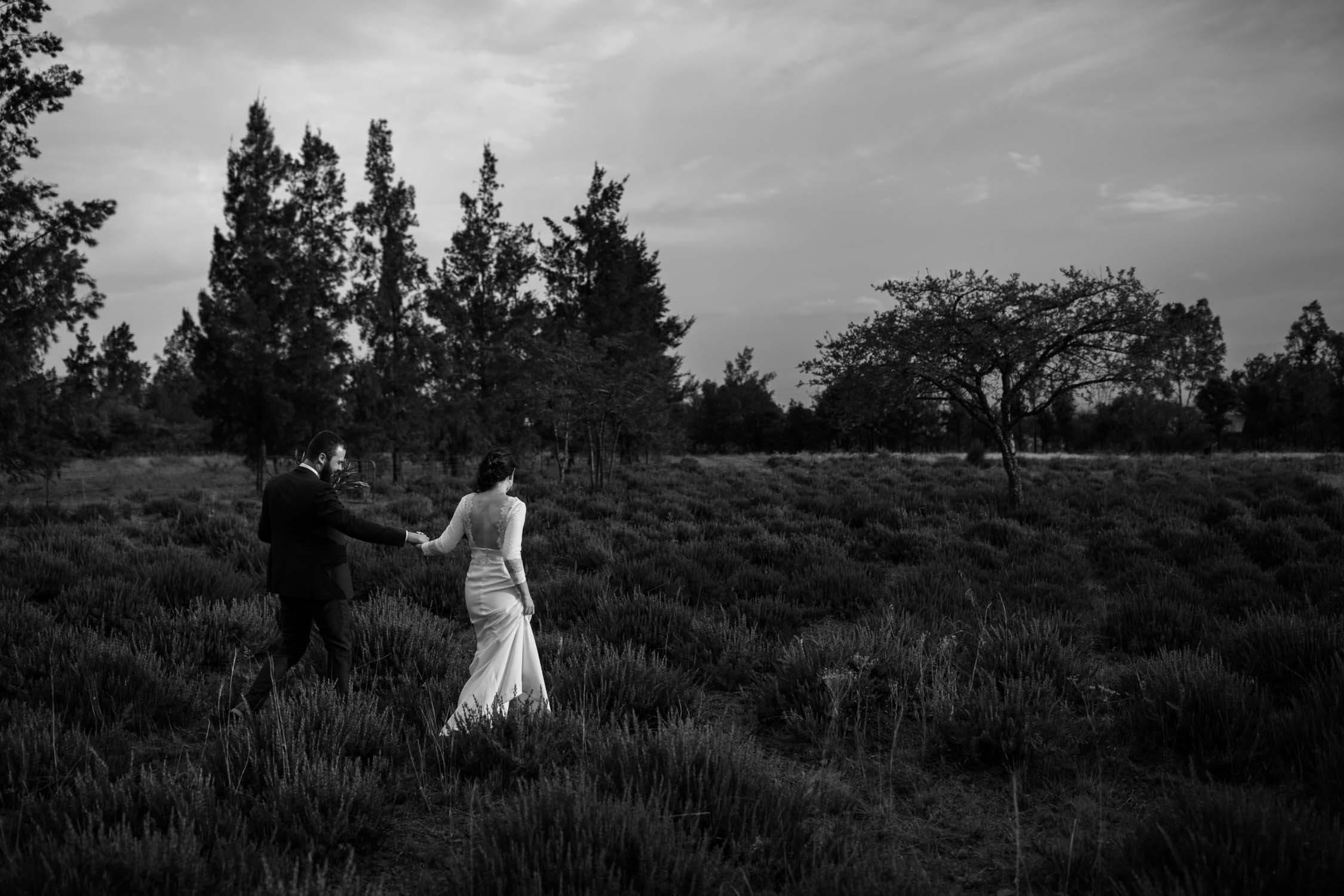 Epic black and white photo of couple walking in a rosemary field taken by candid Vancouver Wedding Photographer
