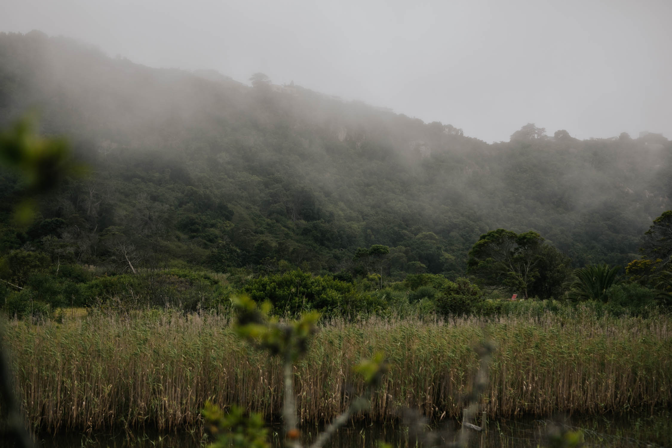 Mist on the Piesang River in Plettenberg Bay